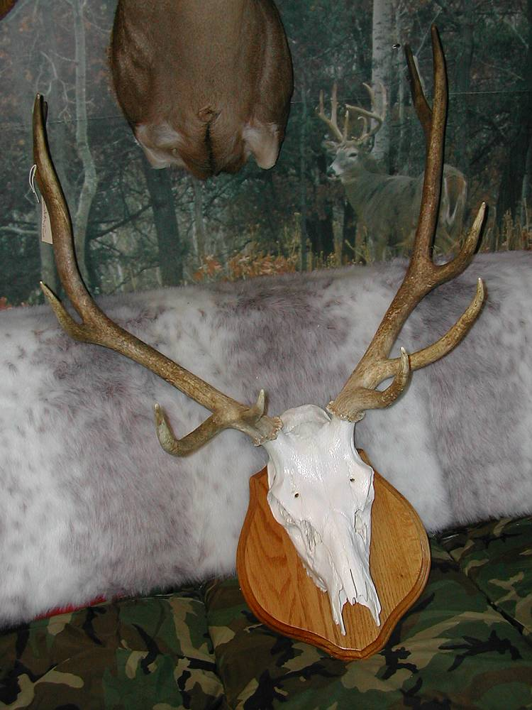 Novelty Taxidermy Mounts Gallery Wall New Jersey Taxidermist