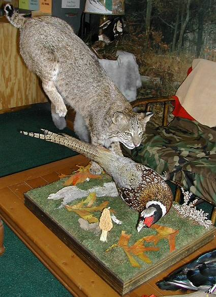 NJ Taxidermist Richard G. Santomauro | Mammal Taxidermy | Wall, New ...